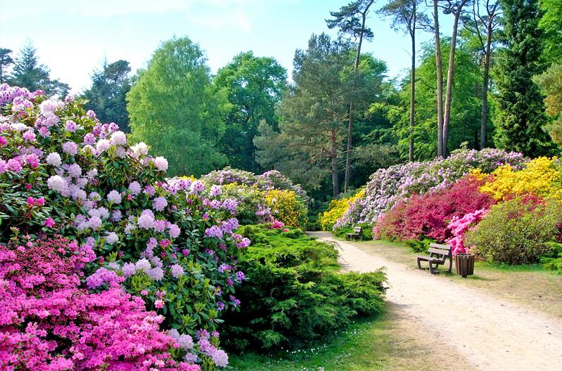 ASB_GM_Der_4_5_ha_grosse_Rhododendronpark_Graal_Mueritz_befindet_sich_im_Westen_des_Ortes.jpg